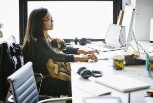 Consejos para convertir tu oficina en un lugar pet friendly