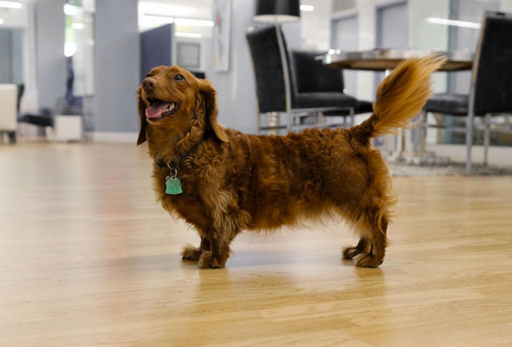 Consejos para convertir tu oficina en un lugar pet friendly - oficina-pet-friendly-6