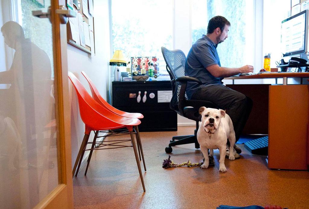Consejos para convertir tu oficina en un lugar pet friendly - oficina-pet-friendly