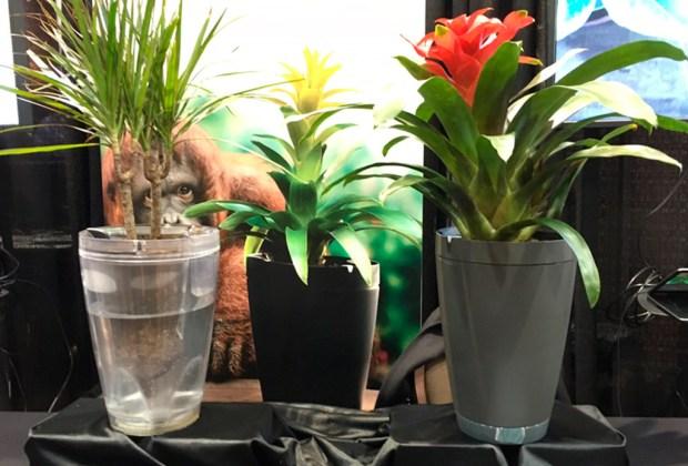 ¿Saldrás pronto de viaje? Esta macetas inteligentes riegan automáticamente tus plantas - parrot-1024x694