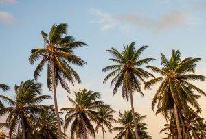 La playlist para disfrutar de un fin de semana en Acapulco
