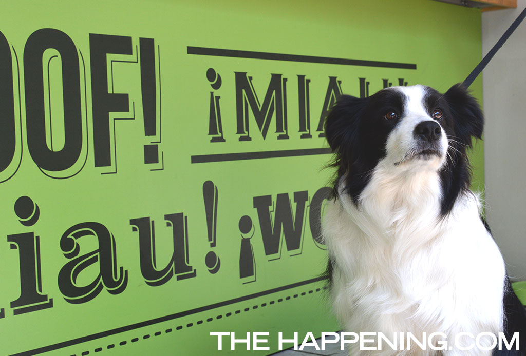 Ahora Petsy no solo será online, ¡descubre su tienda en Polanco!