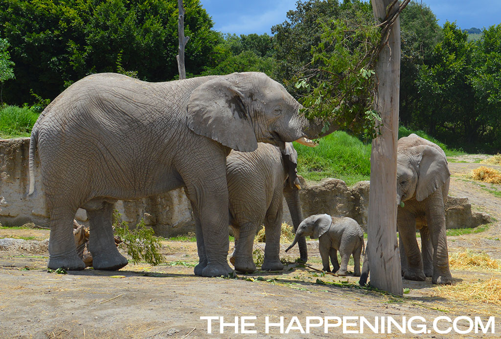 ¡Roadtrip en familia! Conoce al nuevo integrante del Africam Safari - elefante-2