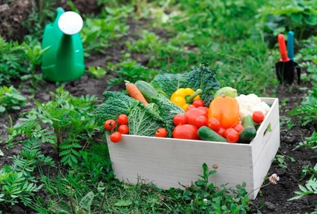5 cambios que debes hacer en tu estilo de vida para volverte eco-friendly - huerto-1024x694