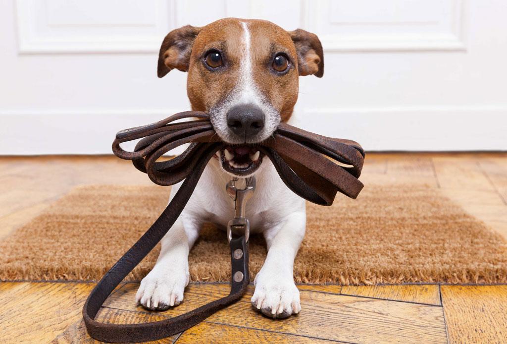 ¡A tan solo un click! Los servicios online para tu perro