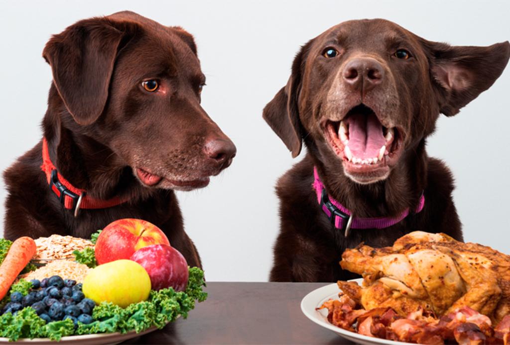 ¿Sabías que la comida deshidratada tiene muchos beneficios para tu perro?