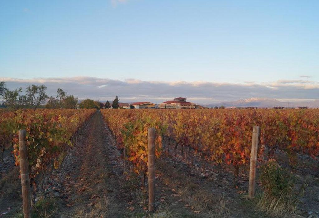 7 bodegas que debes de visitar en Rioja, España