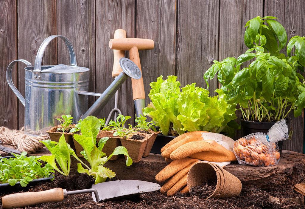 DIY: Crea tu propio huerto orgánico - huerto-organico