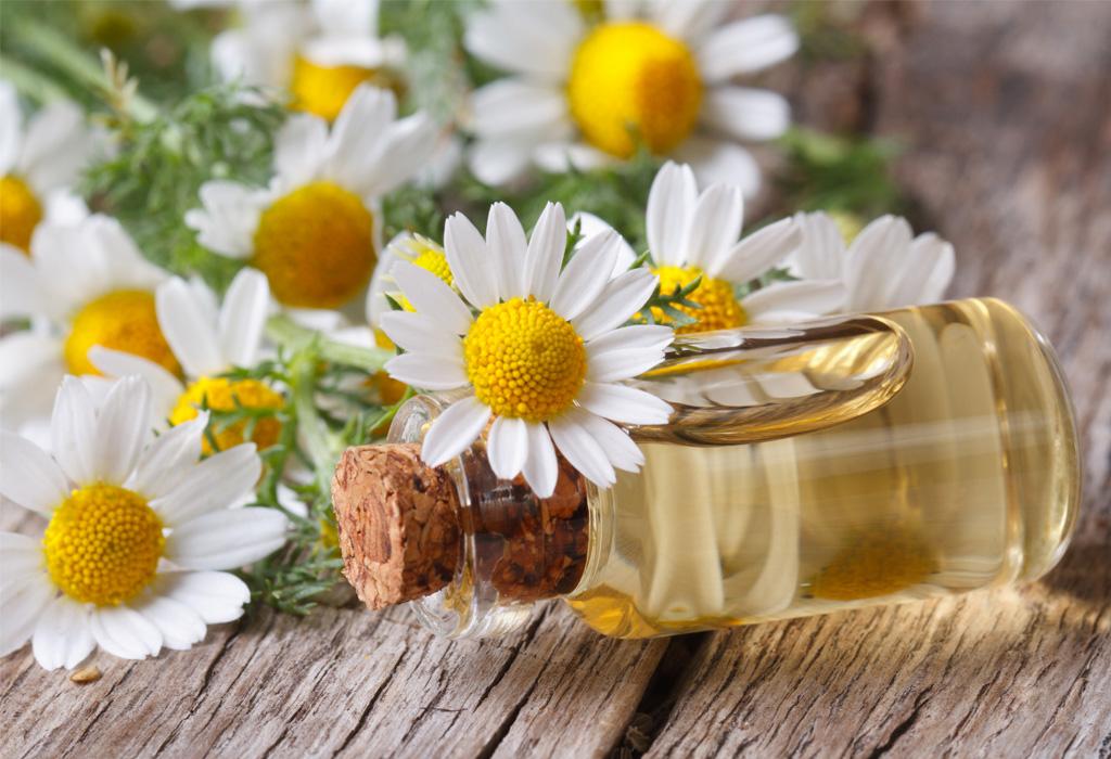 Descubre los diferentes significados de la aromaterapia - manzanilla