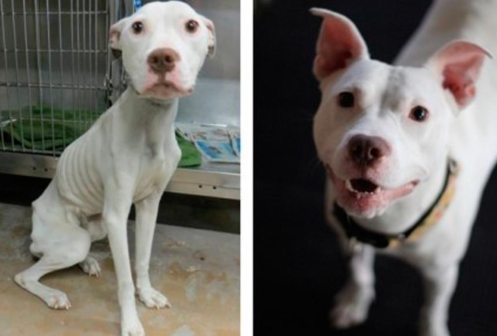 Increíbles fotos de antes y después de perritos rescatados