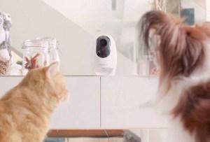 Pawbo: el cuidador personal de tu mascota