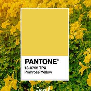 QUIZ: Dinos qué tan millennial eres y te diremos qué planta tener... - pantone-3