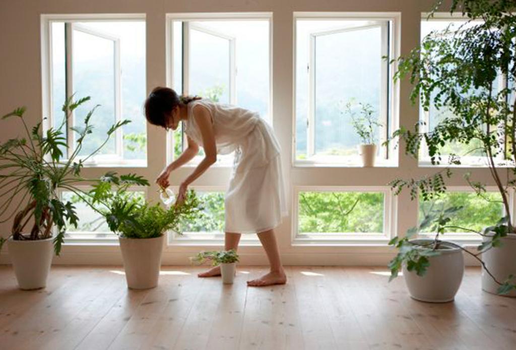 Decorar tu casa con plantas tiene más beneficios de los que te imaginas - piel