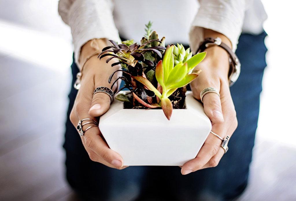 """Cosas """"extrañas"""" que puedes hacer para cuidar mejor tus plantas - plantas-millennials-3-1024x694"""