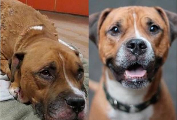 Increíbles fotos de antes y después de perritos rescatados - sucios-1024x694