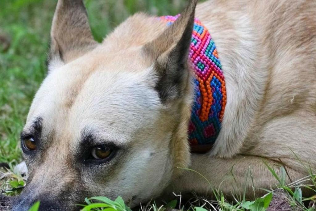 ¡Ya puedes vestir a tu mascota con artesanía mexicana!