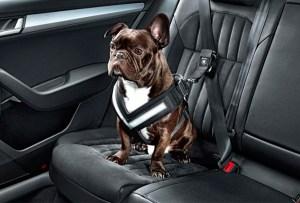 Ahora tu perro irá mucho más seguro en el coche con estos cinturones