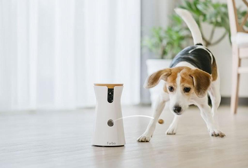 Sorprende a tu mascota con estos regalos de Navidad - furbo-camara-perro