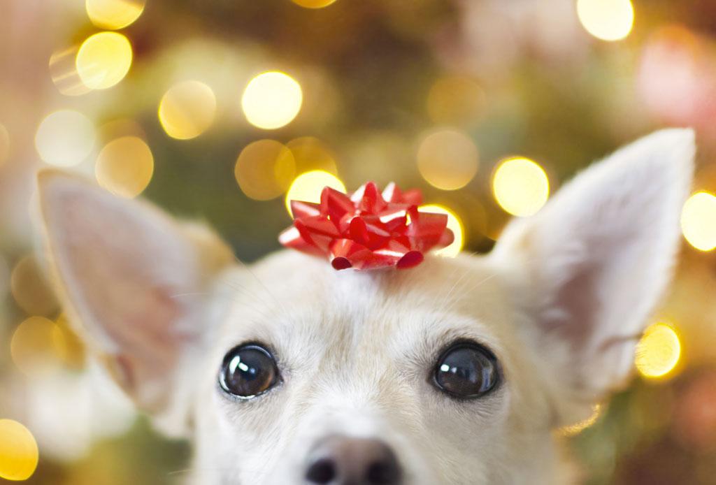 Estas fiestas NO regales una mascota, ¡te decimos por qué! - perro-no-regalo-2