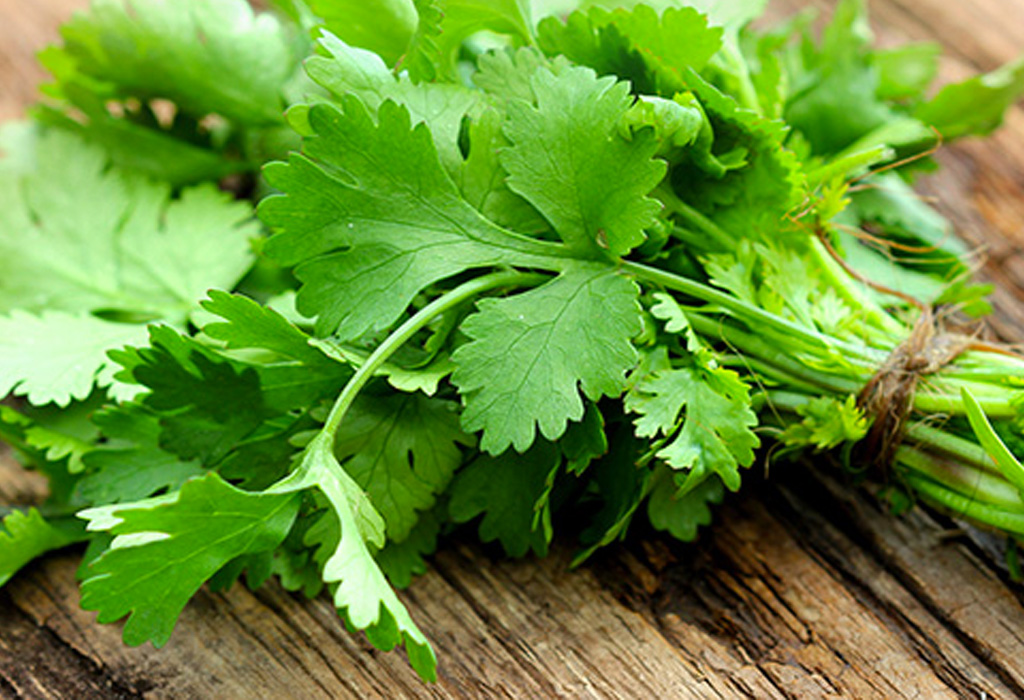 Hierbas que le darán un sabor único a tus drinks - cilantro