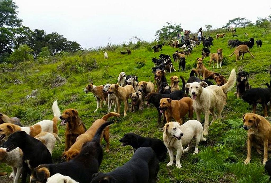 Los países más dog friendly de Latinoamérica que puedes visitar pronto - dog_friendly_4