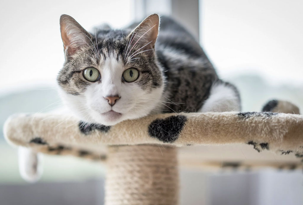 Fact: los gatos pueden tener cualquiera de estas 5 personalidades - gato-3