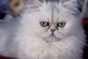 Fact: los gatos pueden tener cualquiera de estas 5 personalidades