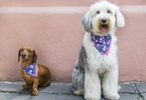 Accesorios que harán entrar en mood veraniego a tus perros