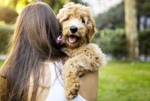 Toma en cuenta TODOS estos puntos antes de adoptar una mascota