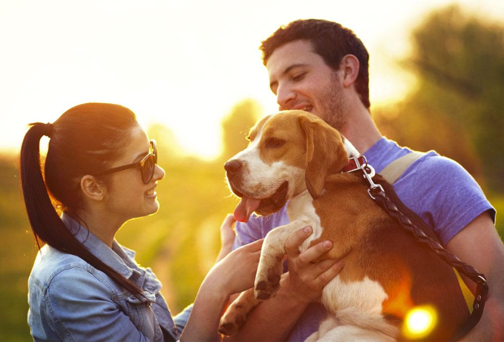 «Cuida a mi mascota», una guardería que lo hará sentir como en casa