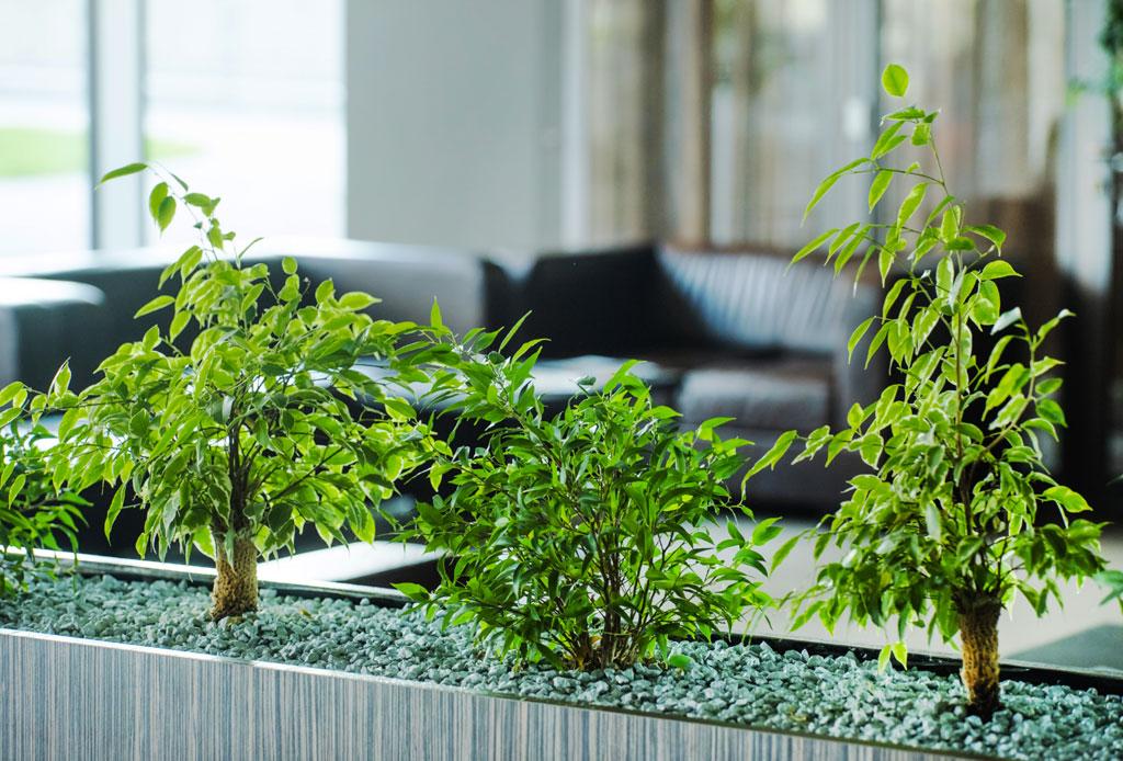 Biofilia: la tendencia de decorar tu lugar de trabajo con naturaleza para mejorar la productividad - biofilia-decoracion-oficina
