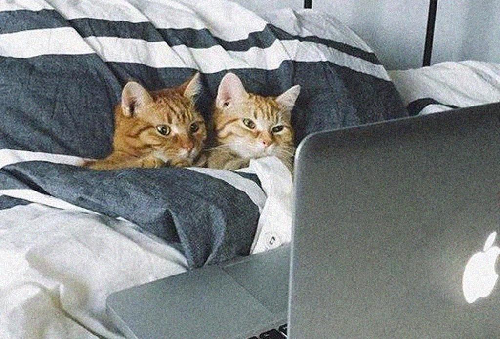 Los gatos y los perros son la mejor compañía para ver series, según Netflix - netflix-gatos-perros-mejor-compania