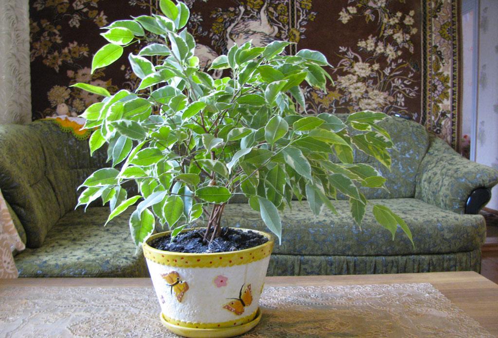 La planta ideal para cada tipo de habitación - plantas_cuarto