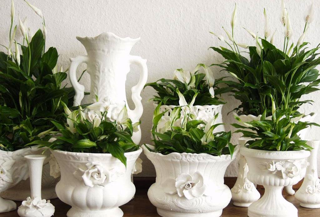 La planta ideal para cada tipo de habitación - plantas_cuarto_2