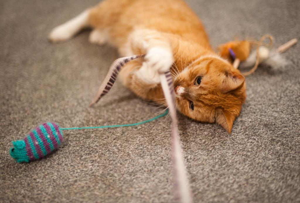 Las apps de juego y aprendizaje que tu gato amará
