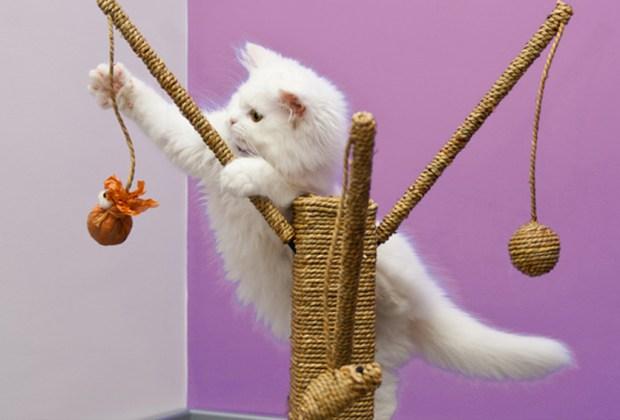 Las apps de juego y aprendizaje que tu gato amará - gato-con-juegos-1-1024x694