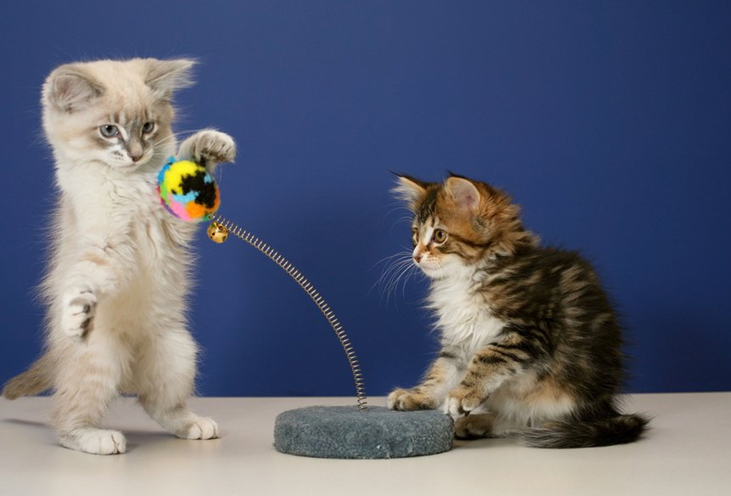 Características que indiscutiblemente amarás de un gato como mascota - gatos-juegos-apps-1024x694