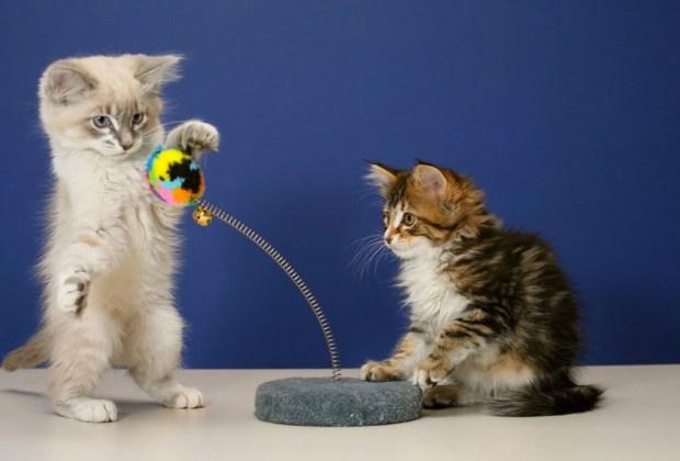 Las apps de juego y aprendizaje que tu gato amará - gatos-juegos-apps-1024x694