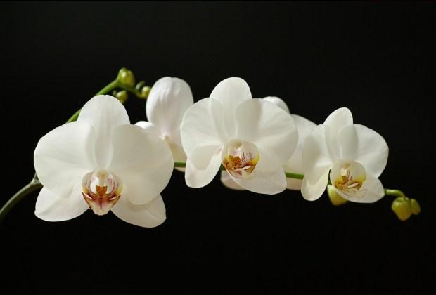 Las exposiciones imperdibles que debes visitar este mayo, mes de los museos - orquideas-de-primavera-1-1024x694