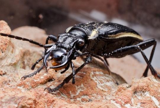 Las mascotas más extrañas en todo el mundo - beetle-300x203