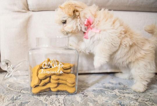 ¿Crees estar obsesionado con tu perro? ¡Checa cuántas cosas de esta lista haces! - senales-obesionado-perro-in-good-way-10-300x203