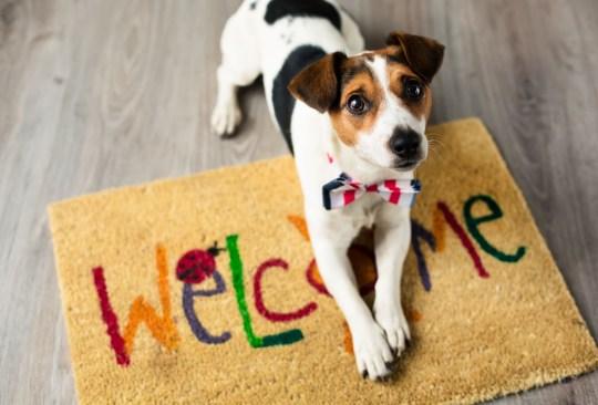 ¿Crees estar obsesionado con tu perro? ¡Checa cuántas cosas de esta lista haces! - senales-obesionado-perro-in-good-way-3-300x203