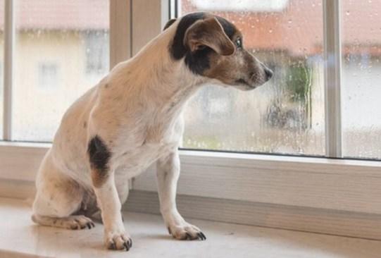 Estos son los cuidados para tu perro en épocas de lluvia - consejos-cuidados-perro-epoca-lluvia-3-300x203