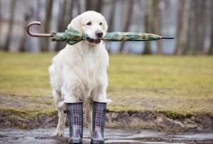 Estos son los cuidados para tu perro en épocas de lluvia