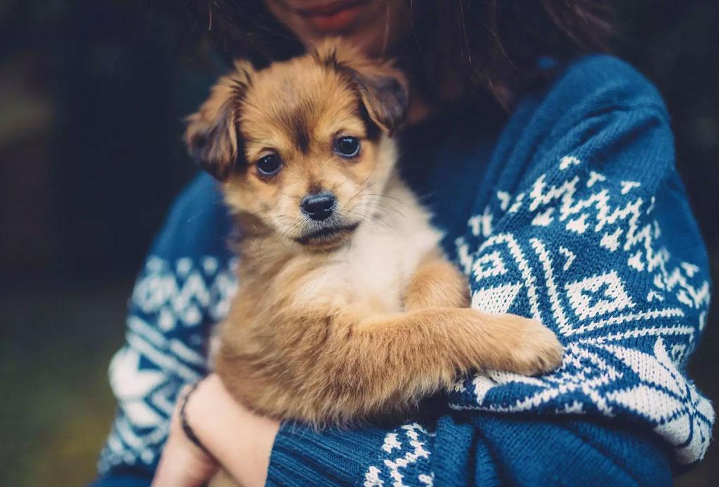 Lo que tienes que saber de la edad de tu perro y las etapas de su vida - edad-perro-etapa-de-vida-2