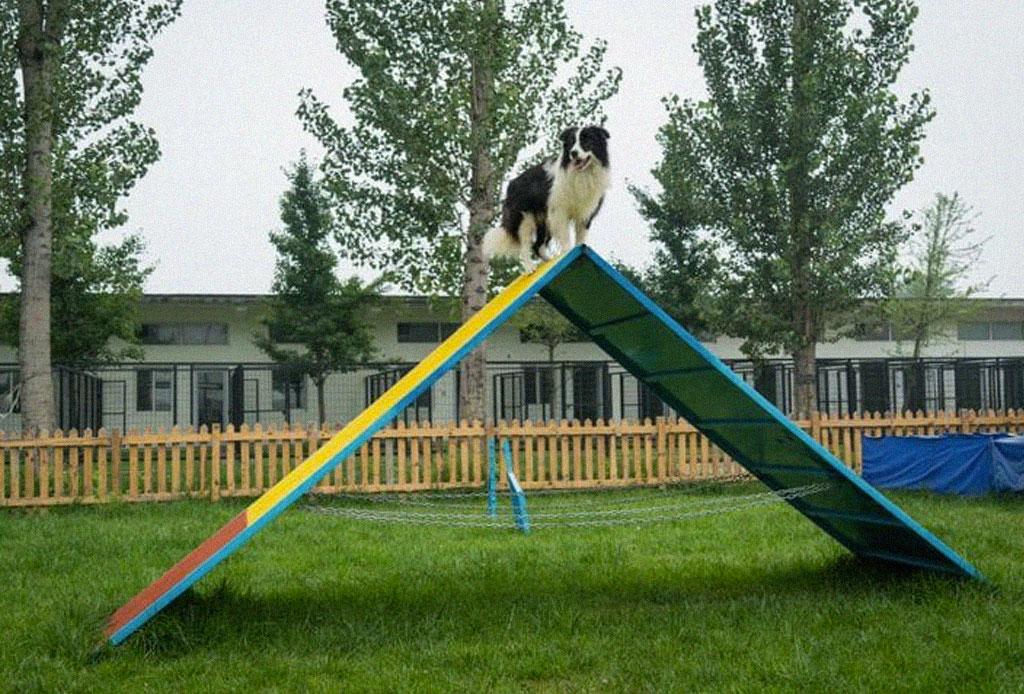 Conoce la mansión de este perro influencer - perro-influencer-mansion-3