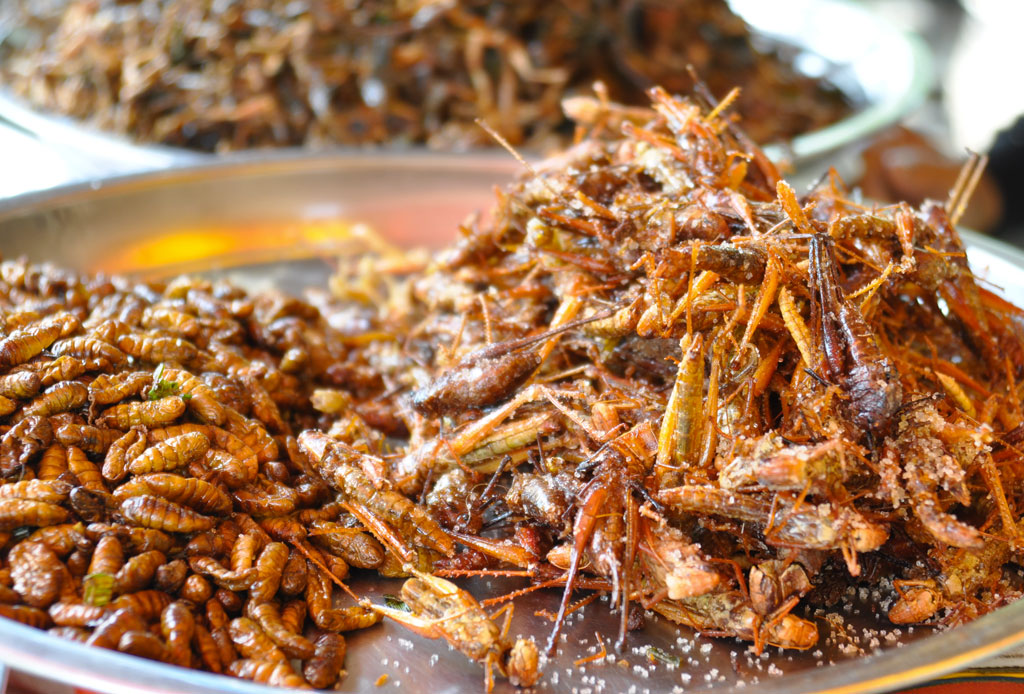 Comer insectos podría beneficiar tu salud más de lo que crees
