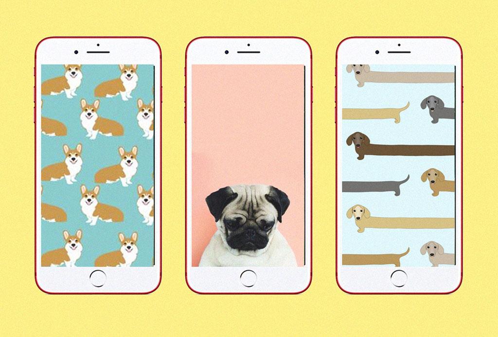 ¿Eres un dog lover? Tenemos el fondo de pantalla ideal para tu smartphone