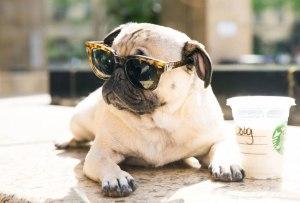 ¡Estas mascotas tienen millones de seguidores en Instagram!