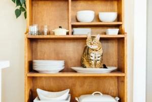 Artículos de decoración de origen mexicano especiales para los amantes de los gatos